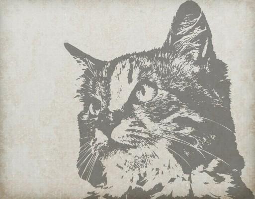 cat-220303_1280