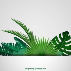tropikalnych-lisci-w-tle_23-2147505483